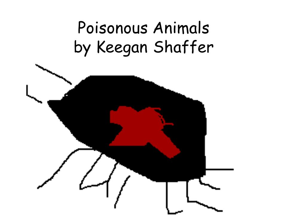 Poisonous Animals by Keegan Shaffer