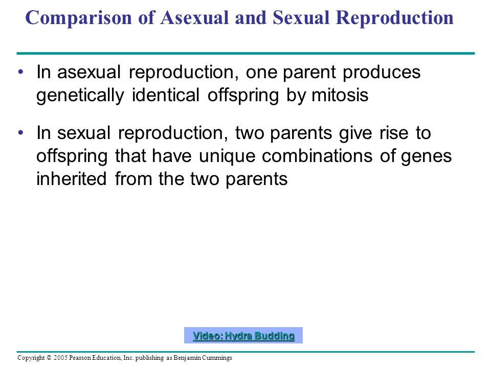 Copyright © 2005 Pearson Education, Inc. publishing as Benjamin Cummings Comparison of Asexual and Sexual Reproduction In asexual reproduction, one pa