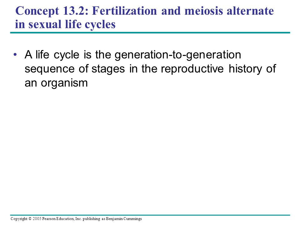 Copyright © 2005 Pearson Education, Inc. publishing as Benjamin Cummings Concept 13.2: Fertilization and meiosis alternate in sexual life cycles A lif