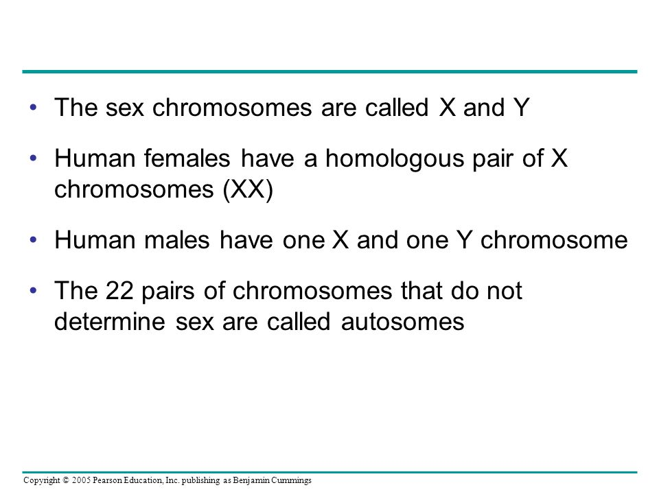 Copyright © 2005 Pearson Education, Inc. publishing as Benjamin Cummings The sex chromosomes are called X and Y Human females have a homologous pair o
