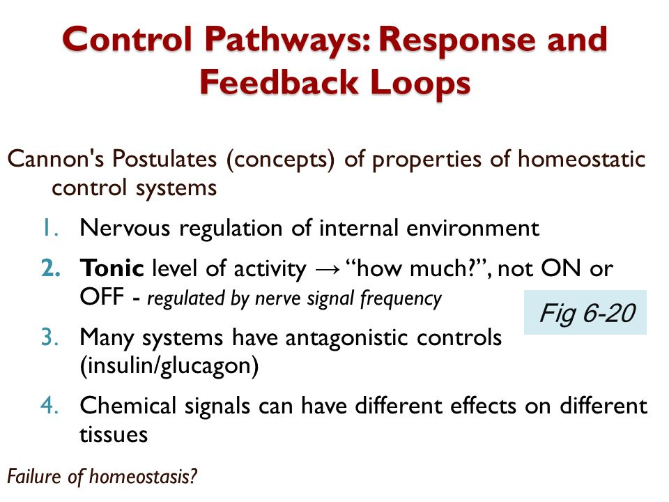 Control Pathways: Response and Feedback Loops Cannon's Postulates (concepts) of properties of homeostatic control systems 1.Nervous regulation of inte