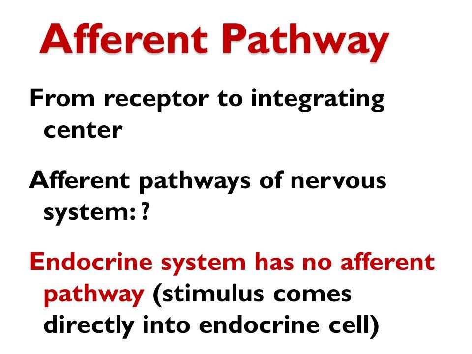 Afferent Pathway From receptor to integrating center Afferent pathways of nervous system: ? Endocrine system has no afferent pathway (stimulus comes d