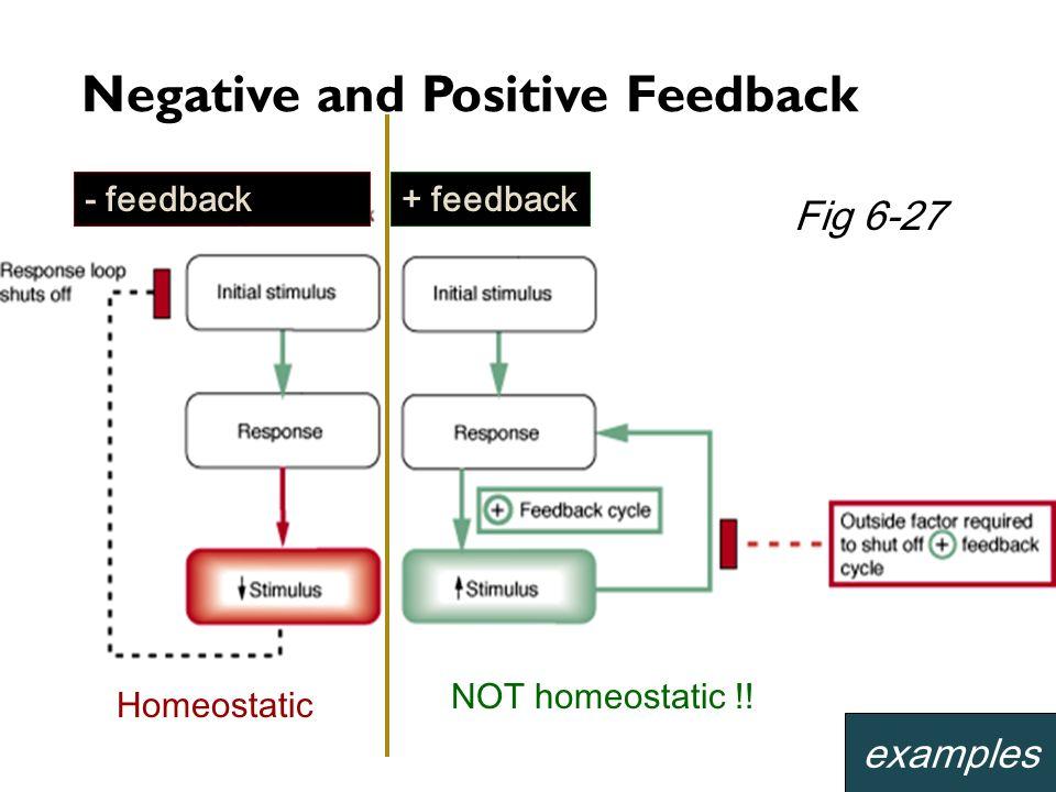 - feedback+ feedback Negative and Positive Feedback Homeostatic NOT homeostatic !! examples Fig 6-27