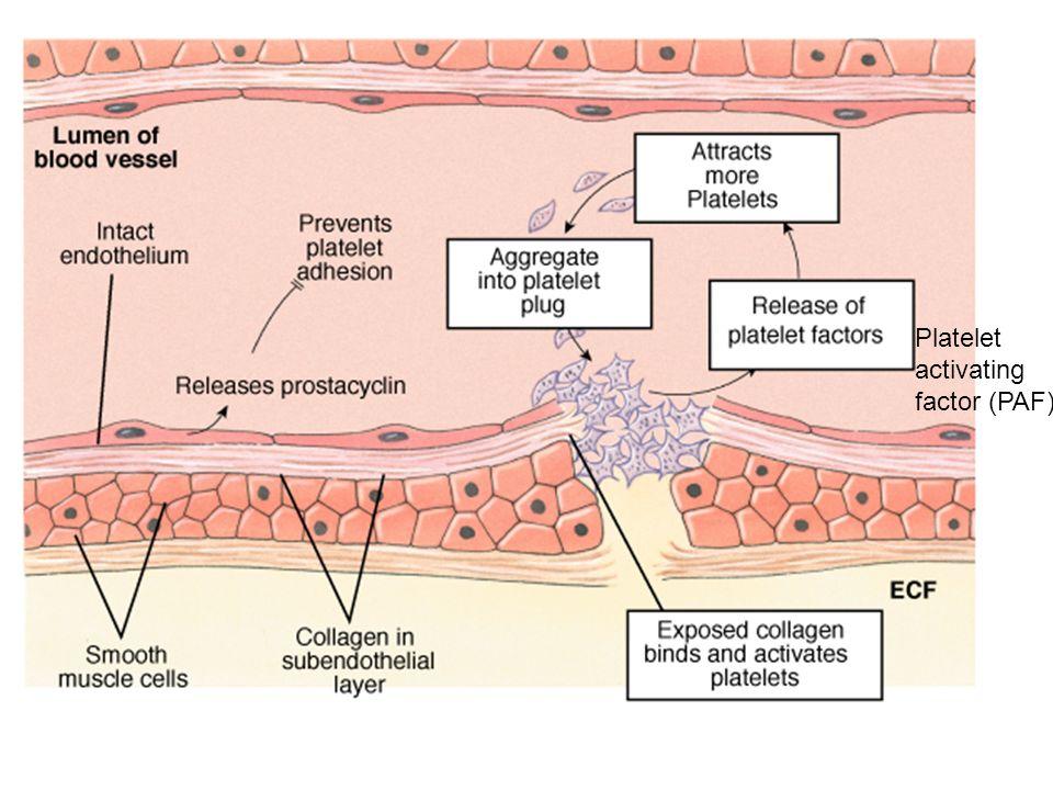 Platelet Plug Formation Platelet activating factor (PAF)