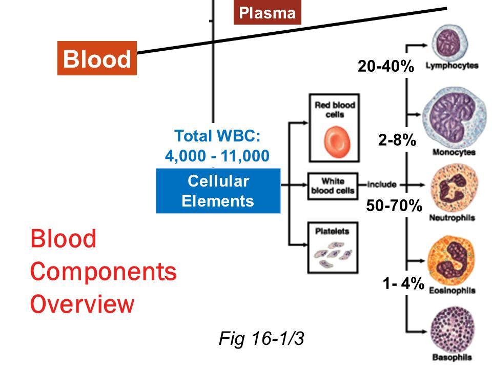 Blood Components Overview Fig 16-1/3 20-40% 50-70% 2-8% Plasma Cellular Elements Blood 1- 4% Total WBC: 4,000 - 11,000
