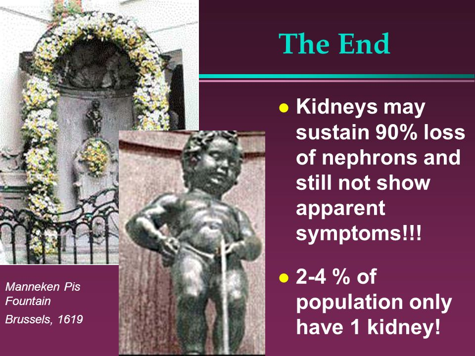 The End Kidneys may sustain 90% loss of nephrons and still not show apparent symptoms!!! 2-4 % of population only have 1 kidney! Manneken Pis Fountain