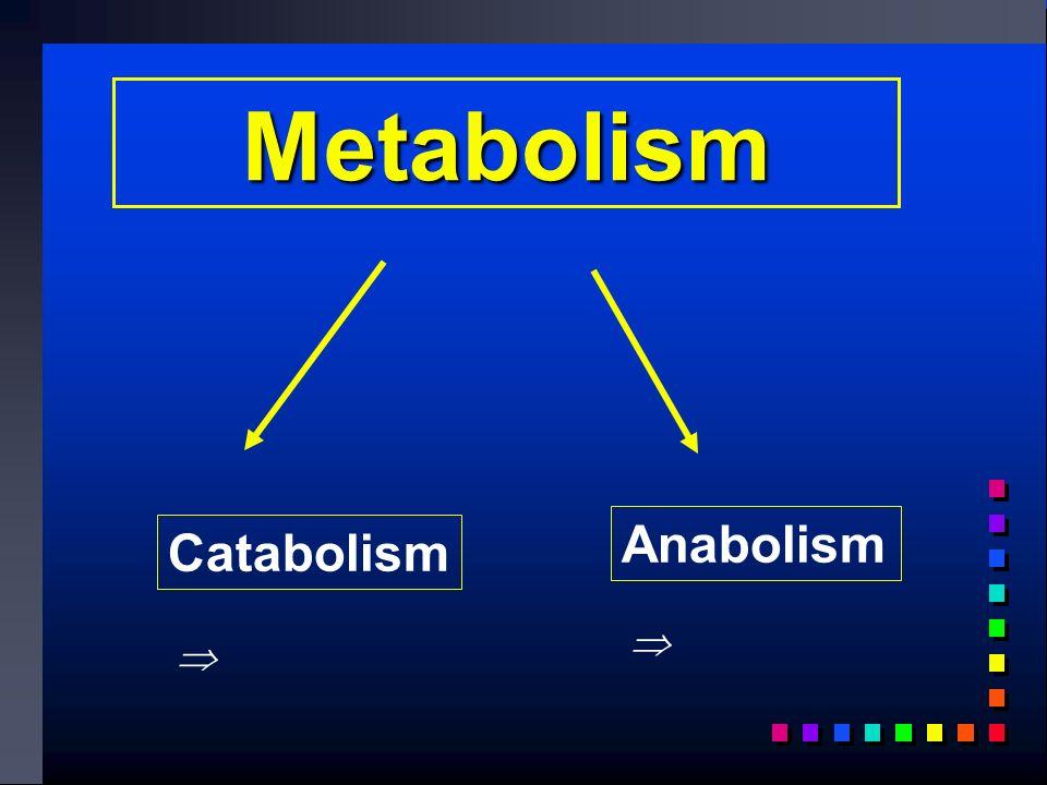 Metabolism Catabolism Anabolism