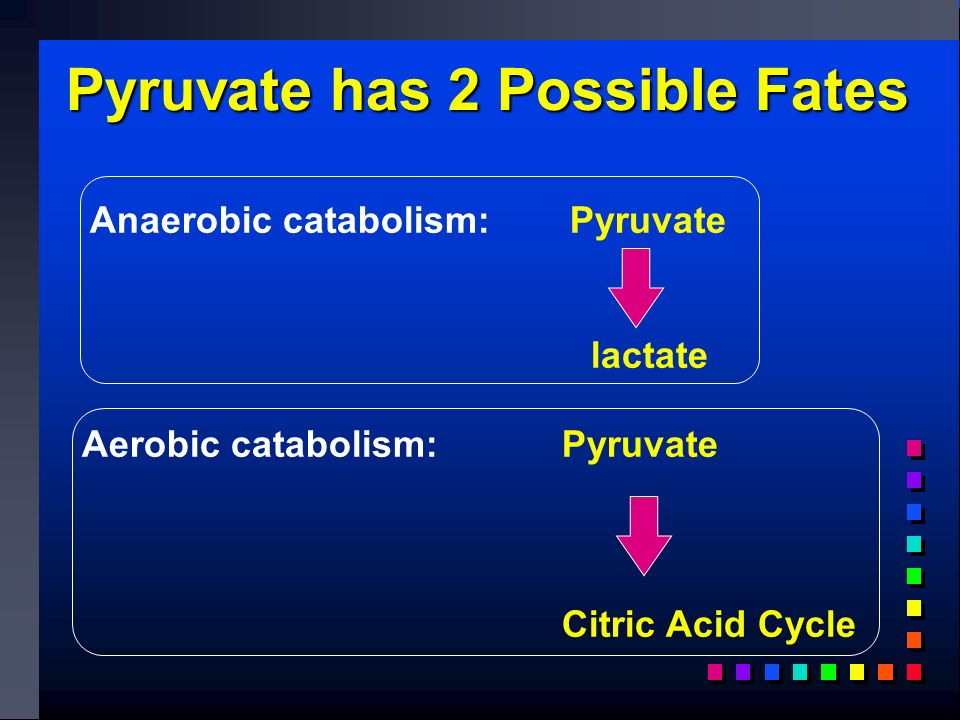 Anaerobic catabolism: Pyruvate lactate Aerobic catabolism: Pyruvate Citric Acid Cycle Pyruvate has 2 Possible Fates