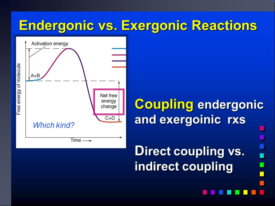 Endergonic vs. Exergonic Reactions Coupling endergonic and exergoinic rxs D irect coupling vs.