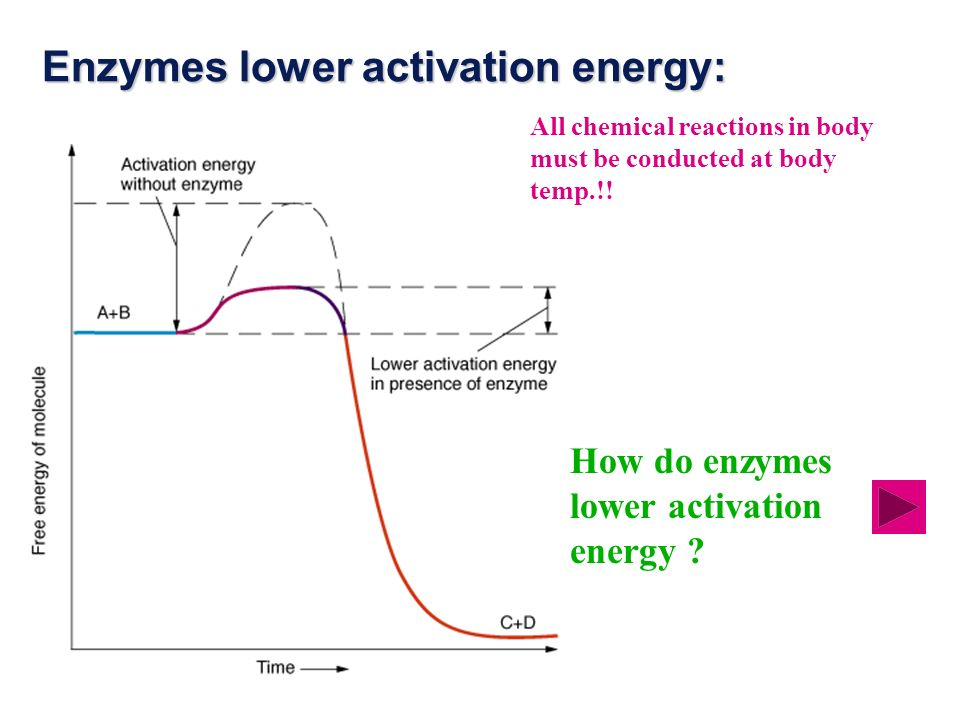 Enzymes lower activation energy: All chemical reactions in body must be conducted at body temp.!.