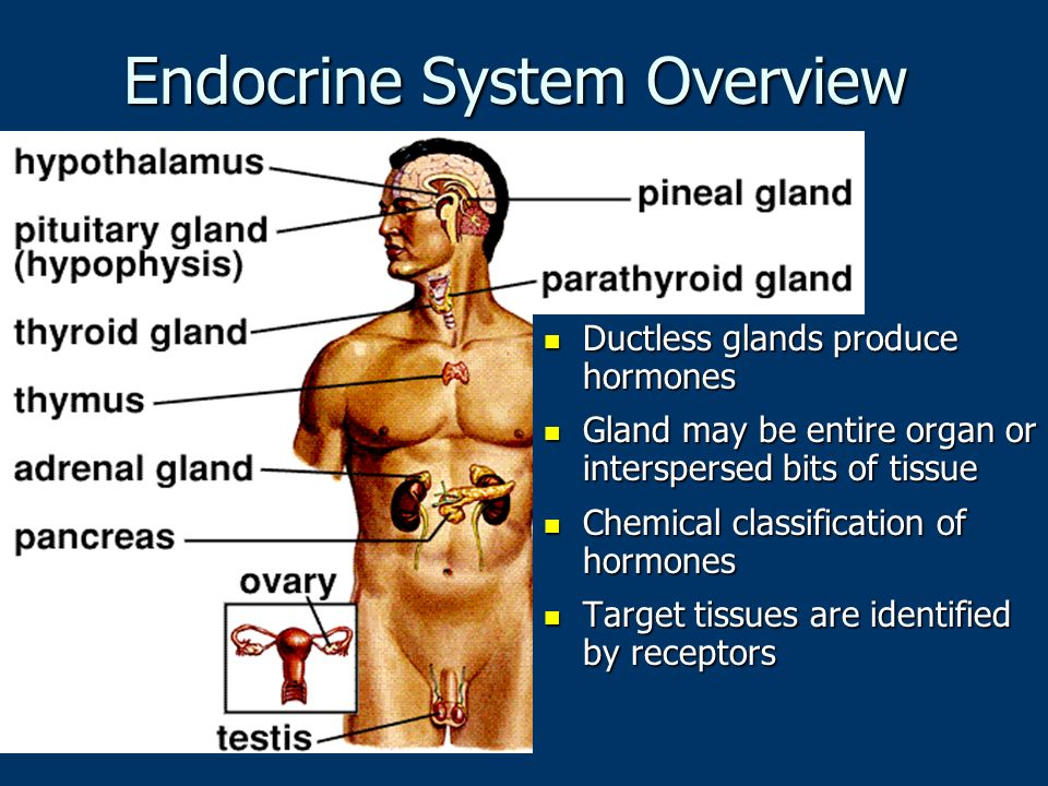 Endocrine System Overview Ductless glands produce hormones Ductless glands produce hormones Gland may be entire organ or interspersed bits of tissue Gland may be entire organ or interspersed bits of tissue Chemical classification of hormones Chemical classification of hormones Target tissues are identified by receptors Target tissues are identified by receptors
