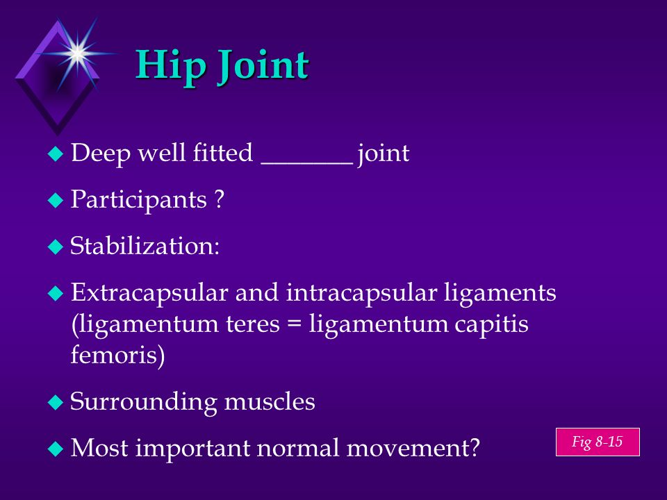 Fig 8-15 Hip Joint Deep well fitted _______ joint Participants ? Stabilization: Extracapsular and intracapsular ligaments (ligamentum teres = ligament