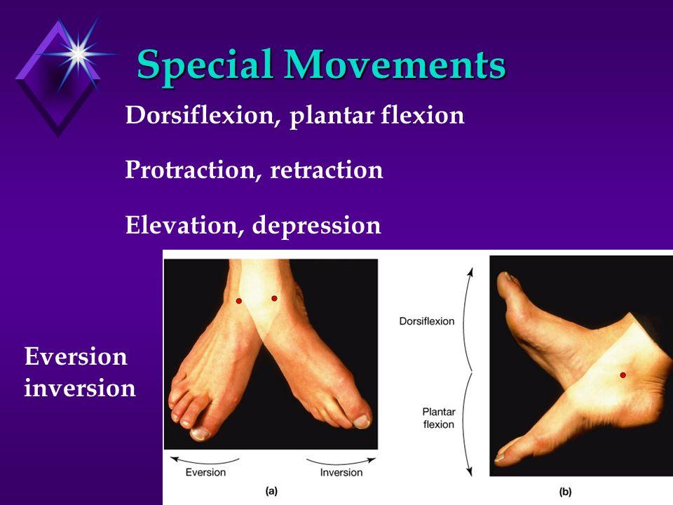 Special Movements Dorsiflexion, plantar flexion Protraction, retraction Elevation, depression Eversion inversion