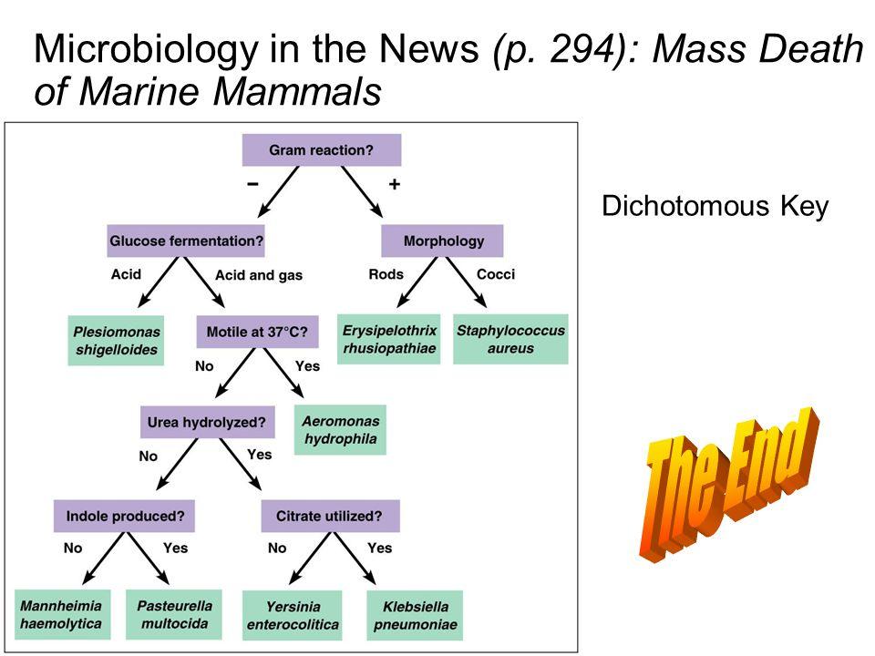 Microbiology in the News (p. 294): Mass Death of Marine Mammals Dichotomous Key