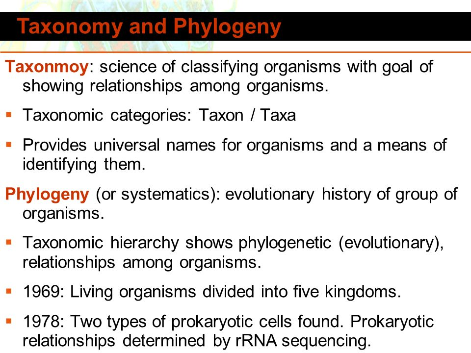 Copyright © 2006 Pearson Education, Inc., publishing as Benjamin Cummings Taxonomy and Phylogeny Taxonmoy: science of classifying organisms with goal