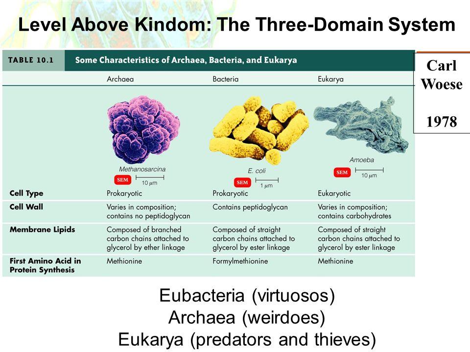 Copyright © 2006 Pearson Education, Inc., publishing as Benjamin Cummings Level Above Kindom: The Three-Domain System Carl Woese 1978 Eubacteria (virt