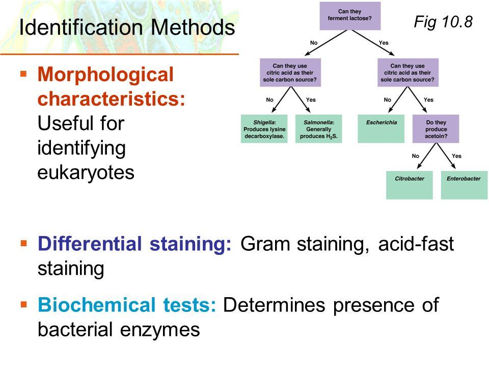 Copyright © 2006 Pearson Education, Inc., publishing as Benjamin Cummings Identification Methods Morphological characteristics: Useful for identifying