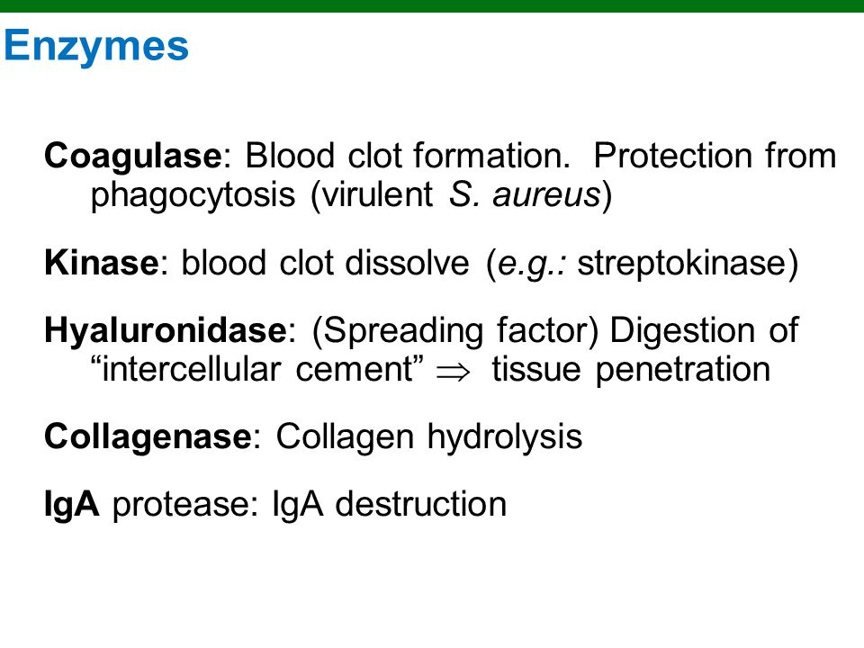 Copyright © 2010 Pearson Education, Inc. Enzymes Used for Penetration
