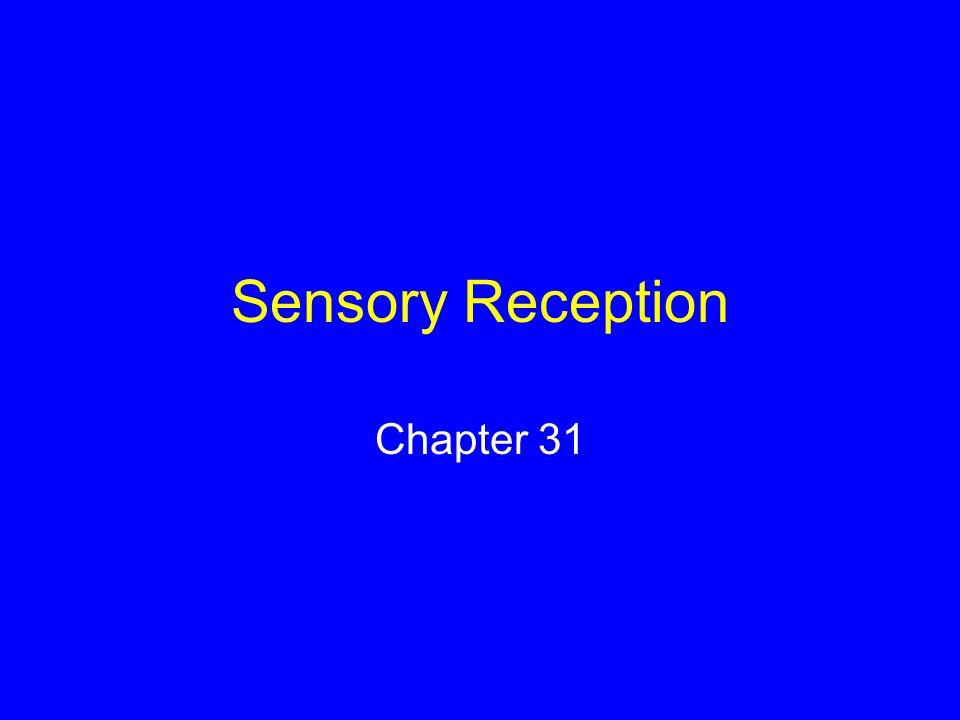 Sensory Reception Chapter 31