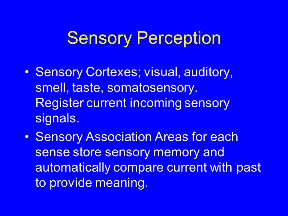 Sensory Perception Sensory Cortexes; visual, auditory, smell, taste, somatosensory. Register current incoming sensory signals. Sensory Association Are
