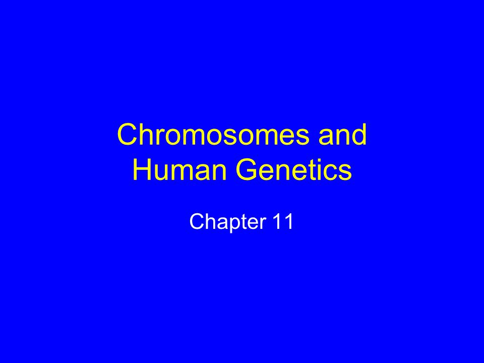 The Y Chromosome Fewer than two dozen genes identified One is the master gene for male sex determination –SRY gene (Sex-determining region of Y) SRY present, testes form SRY absent, ovaries form