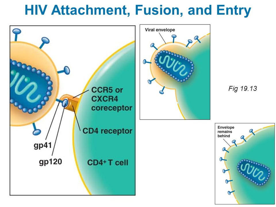 HIV Attachment, Fusion, and Entry Fig 19.13