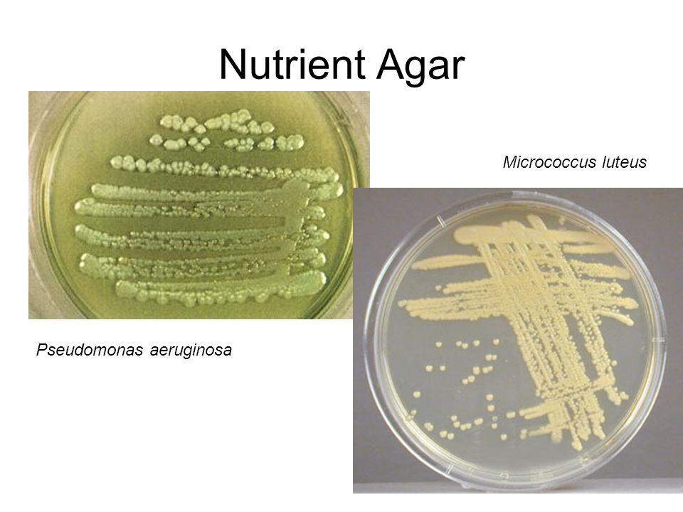 Mannitol Salt Agar Mannitol salt agar is both a selective and differential growth medium.