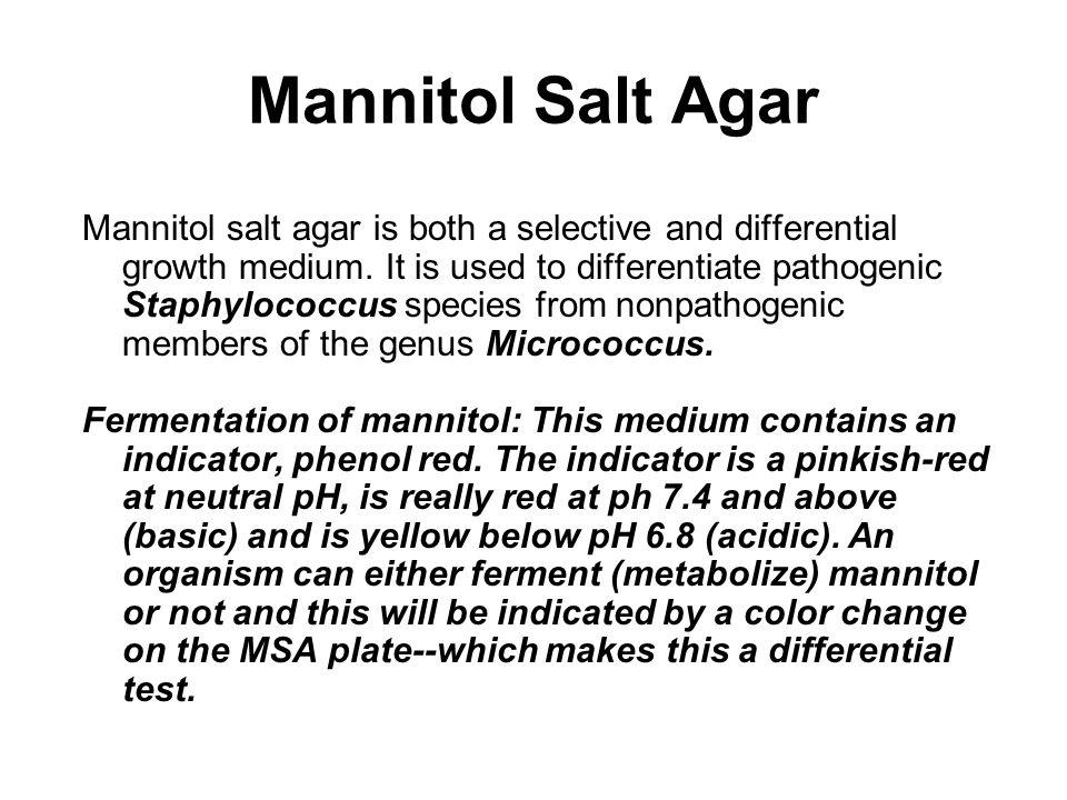 1.S. aureus Salt tolerance + Mannitol fermentation + (yellow) 2.
