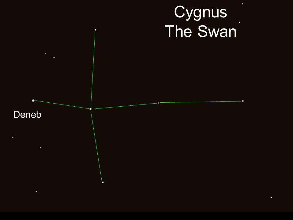 Cygnus The Swan Deneb