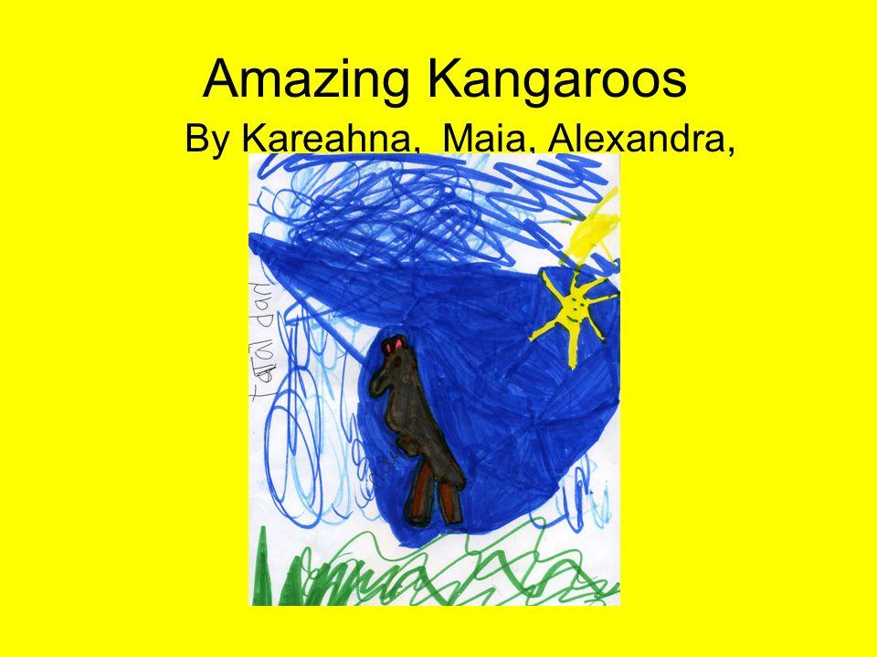 Amazing Kangaroos By Kareahna, Maia, Alexandra,