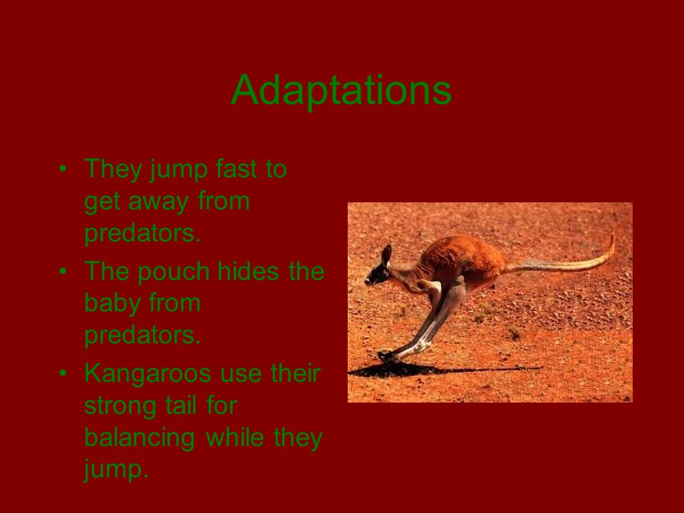 Adaptations They jump fast to get away from predators.