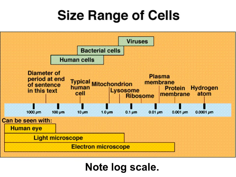 Note log scale.
