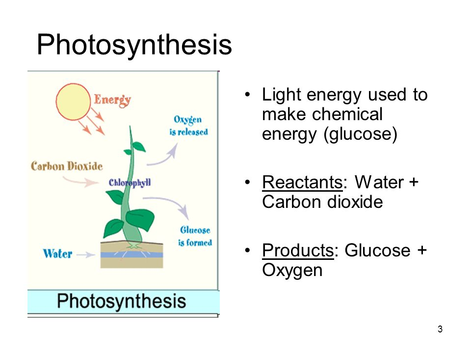 Photosynthesis Light energy used to make chemical energy (glucose) Reactants: Water + Carbon dioxide Products: Glucose + Oxygen 3