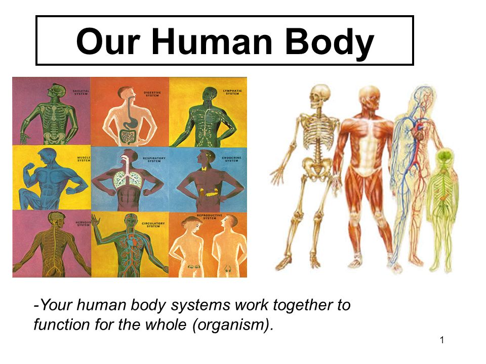 1 Our Human Body -Your human body systems work together to function for the whole (organism).