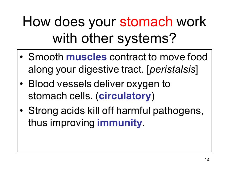 14 How does your stomach work with other systems? Smooth muscles contract to move food along your digestive tract. [peristalsis] Blood vessels deliver