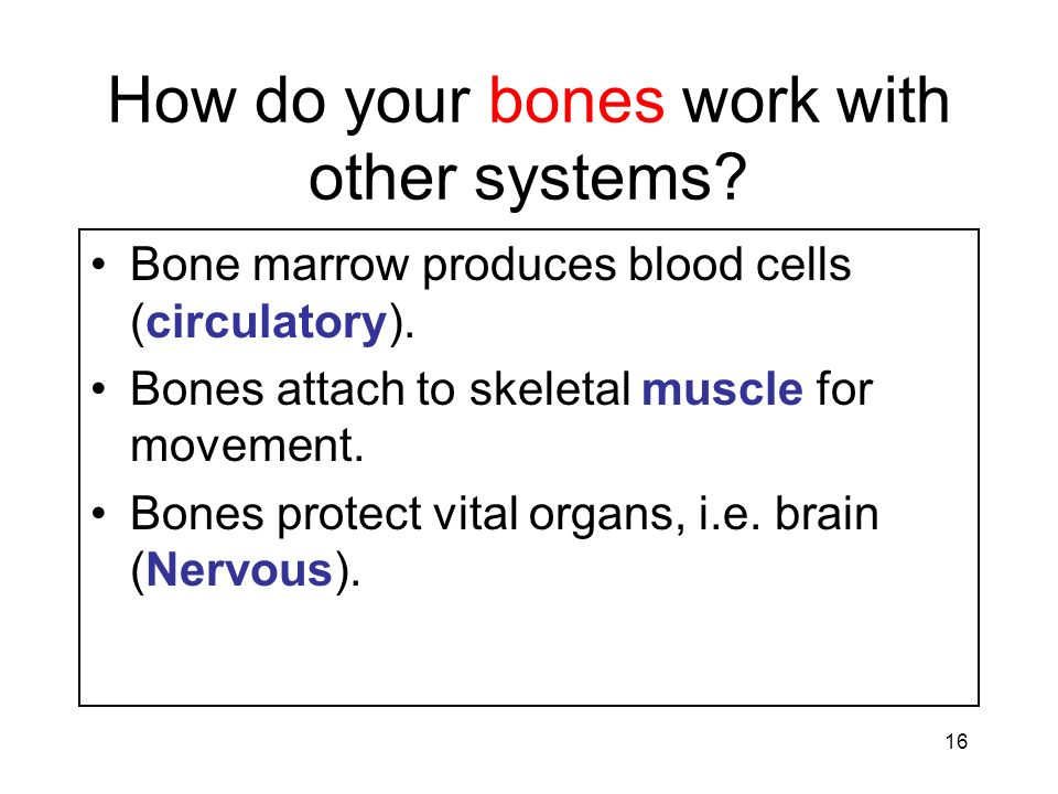 16 How do your bones work with other systems? Bone marrow produces blood cells (circulatory). Bones attach to skeletal muscle for movement. Bones prot