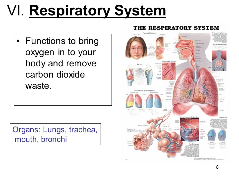 physio ex 8 0 exercise 37b respiratory system mechanics Study exercise 37a a and p flashcards play which of the respiratory sounds is heard during expllain how the carbonic acid bicarbonate buffer system of the.