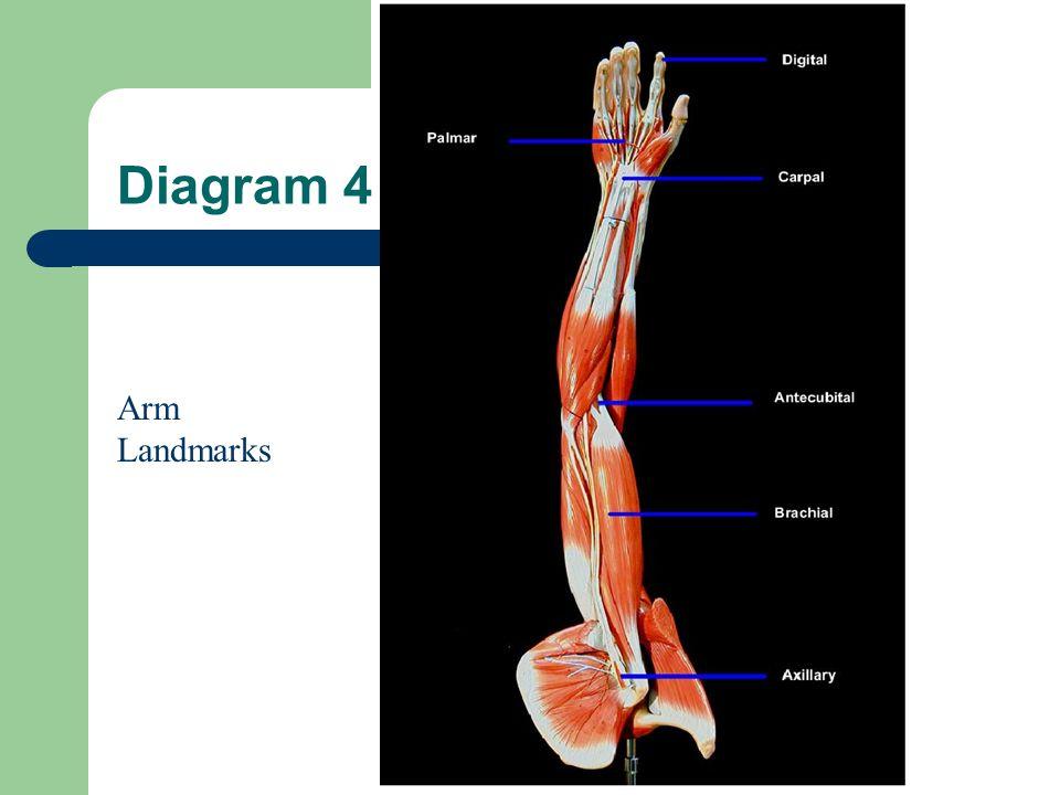 Diagram3 Leg Landmarks