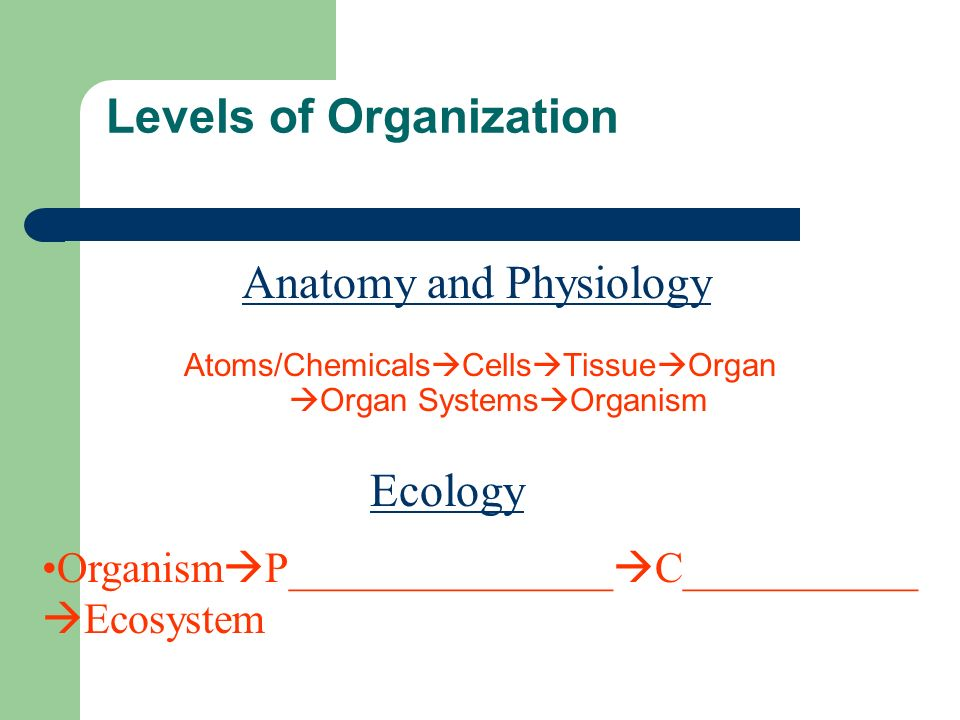 Levels of Organization Atoms/Chemicals Cells Tissue Organ Organ Systems Organism Organism P_______________ C___________ Ecosystem Anatomy and Physiology Ecology