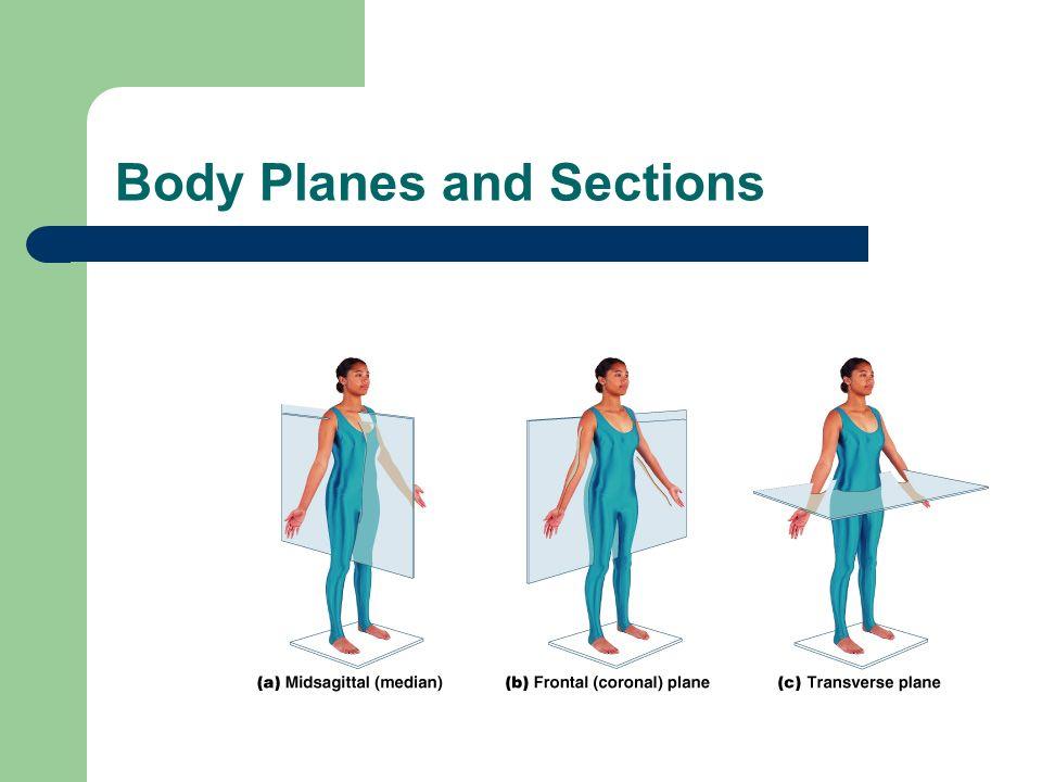 Diagram 5 Torso - Posterior (Body Landmarks) Torso - Posterior (Body Landmarks)