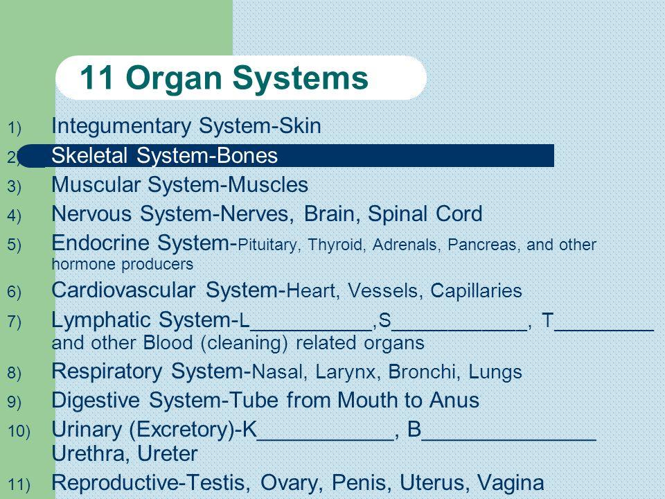 Organ Systems Organisms ? ? ?