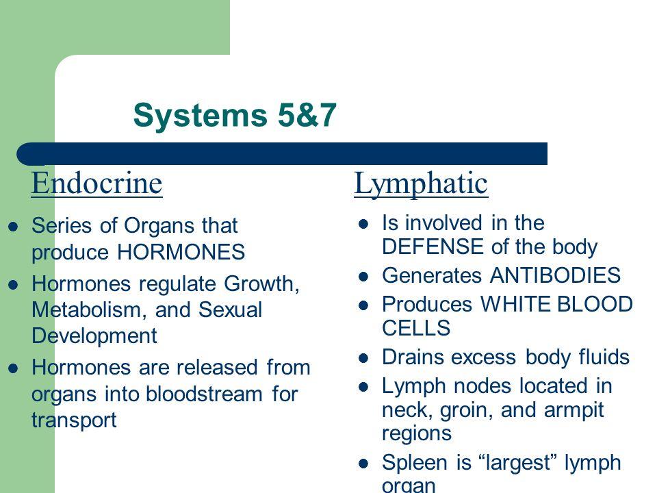 11 Organ Systems 1) Integumentary System-Skin 2) Skeletal System-Bones 3) Muscular System-Muscles 4) Nervous System-Nerves, Brain, Spinal Cord 5) Endo