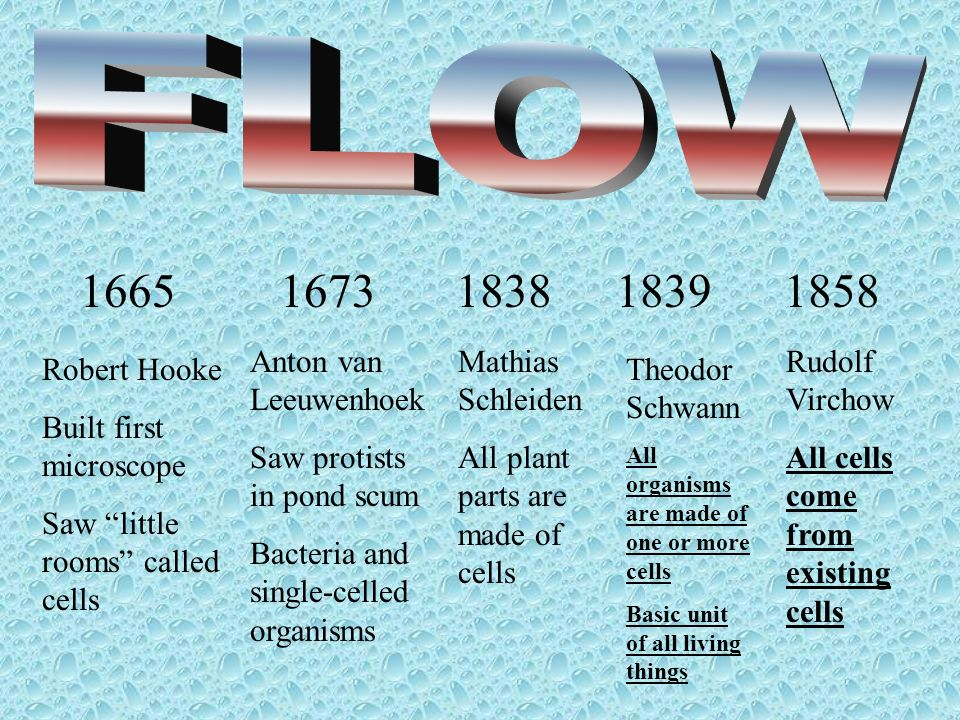16651673183818391858 Anton van Leeuwenhoek Saw protists in pond scum Bacteria and single-celled organisms Robert Hooke Built first microscope Saw litt