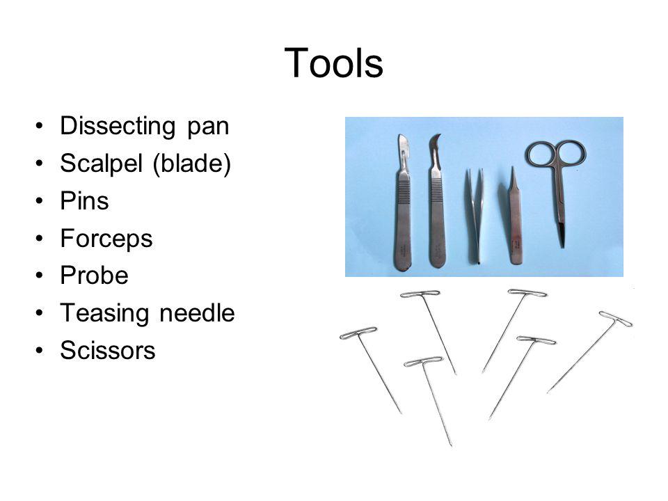 Tools Dissecting pan Scalpel (blade) Pins Forceps Probe Teasing needle Scissors