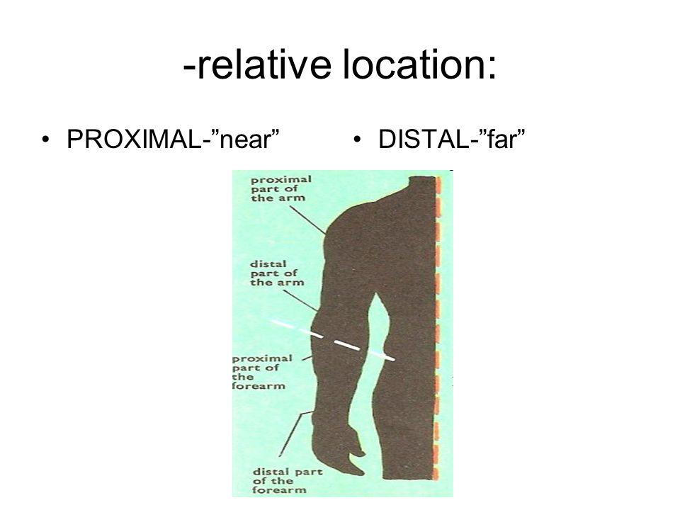 -relative location: PROXIMAL-nearDISTAL-far