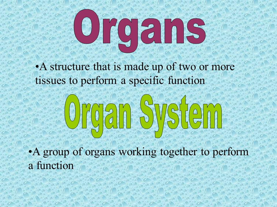 A structure that is made up of two or more tissues to perform a specific function A group of organs working together to perform a function