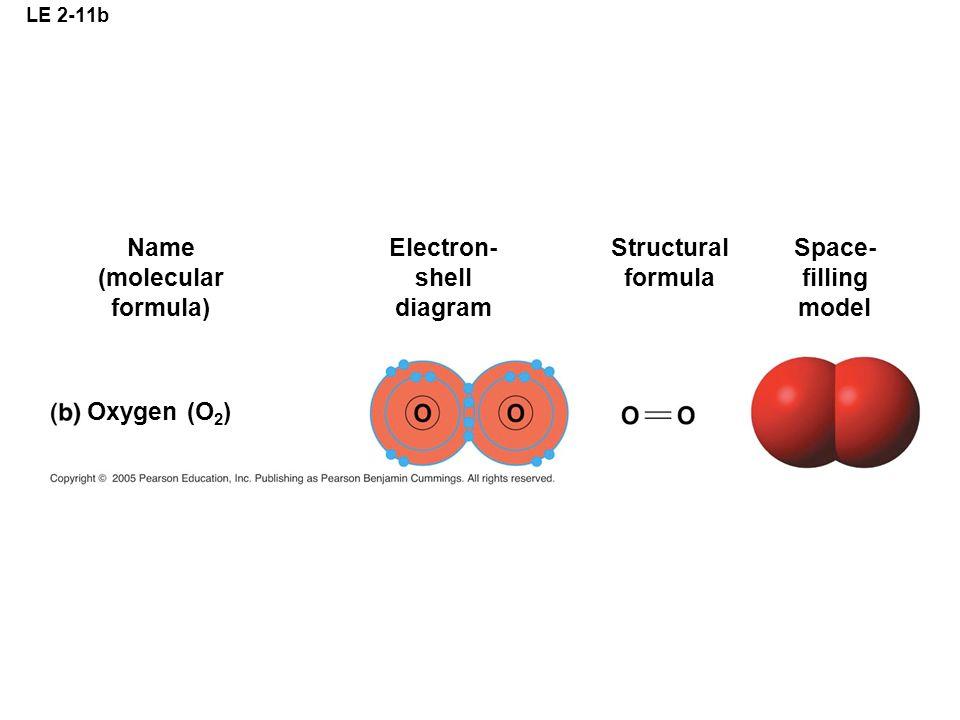 LE 2-11b Oxygen (O 2 ) Name (molecular formula) Electron- shell diagram Structural formula Space- filling model
