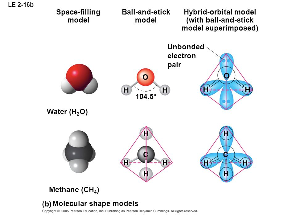 LE 2-16b Space-filling model Ball-and-stick model Hybrid-orbital model (with ball-and-stick model superimposed) Unbonded electron pair Water (H 2 O) M