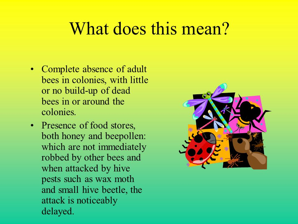 Oh! What is really going on with the bees…..