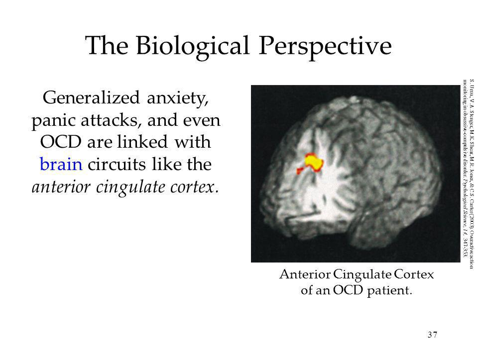 37 The Biological Perspective Generalized anxiety, panic attacks, and even OCD are linked with brain circuits like the anterior cingulate cortex. Ante